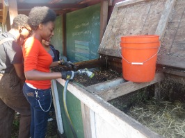 Shauna is mixing the worm box for compost.