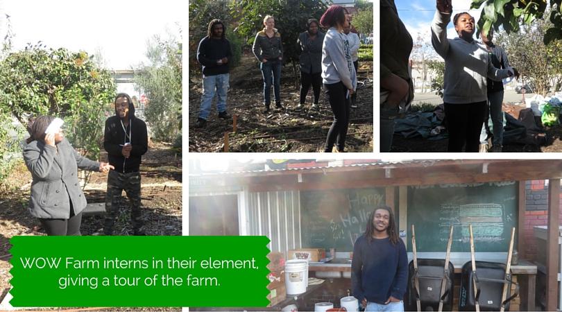 WOW Farm interns in their element giving a tour of the farm.